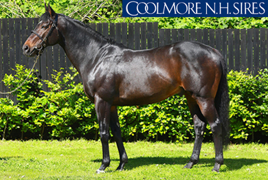 SOLDIER OF FORTUNE (IRE)